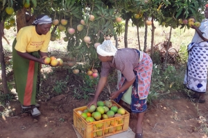 Passion and Mango Market Access Development (PAMA)