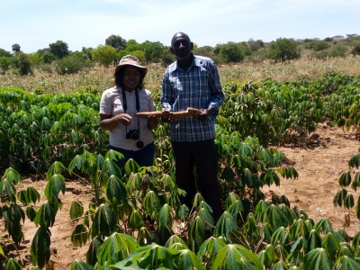 Cassava for food security and resilience in Arid and Semi-Arid regions: Smallholder farmer increases acreage under drought resistant cassava by 100%