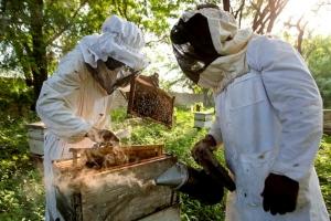 Bee Enterprise (BEET) Programme