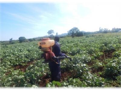 Marsabit farmer builds 3 roomed rental houses from green gram sales
