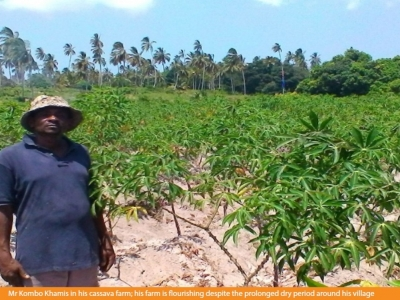 Mr. Kombo Khamis earns USD 300 per season from sale of cassava roots and stems