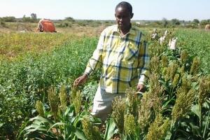 SOMALIA | Rural Commercialization & Markets (RuCom)