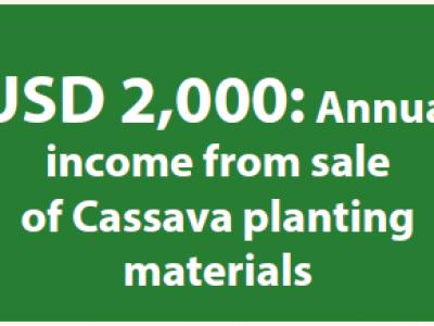 Farmer makes USD 2,000 from sale of Cassava planting materials
