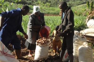 Kafulama Commercial Village farmers realized over USD 7,000 in sales in Malawi