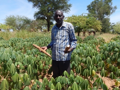 Smallholder farmer raises daughter's school fees from Cassava farming