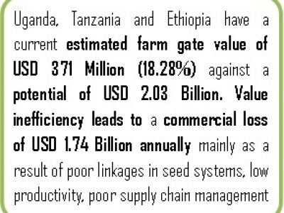 The Need to Transform The Sweet Potato Value Chain, currently at 18.28% of it's capacity; Ethiopia, Tanzania & Uganda