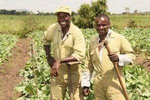 KENYA | Nutrition, Markets, Value chains & Commercialization