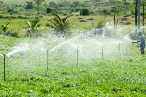 KENYA | Cooperative Agri-business Sustainability Approach- Nyalani irrigation scheme