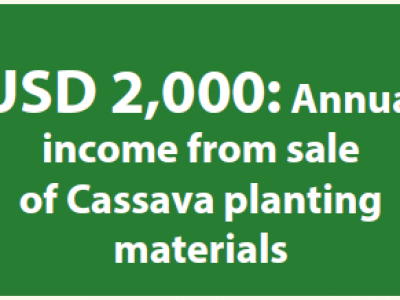 Farmer makes USD 2,000 from sale of Cassava planting materials